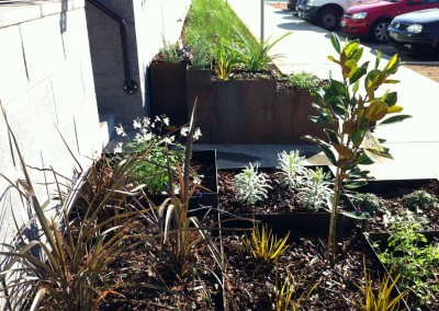 Planted metal boxes featuring natives