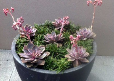 Decorative succulents in a pot