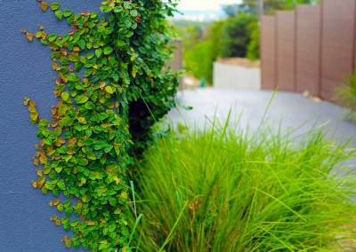 Wall detail of residential planting