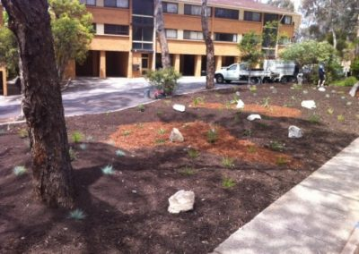 Native landscaped garden in Chifley, Canberra
