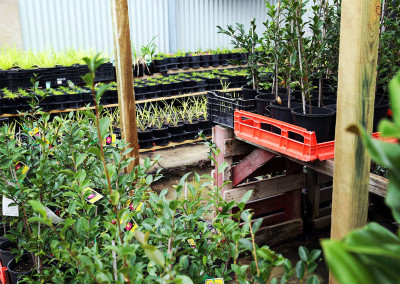 Plants in the Phillips Landscapes nursery